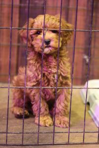 Puppy crating
